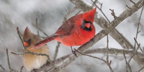 A Very Birdie Valentine's tickets