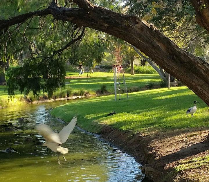 Guided Walk through Veale Park / Walyu Yarta (Park 21) image