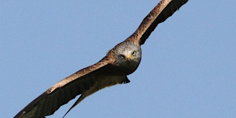 Birds of Wiltshire and the Marden Valley: Challenges They Face tickets