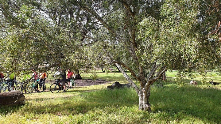 Guided Walk through Ellis Park / Tampawardli (Park 24) image