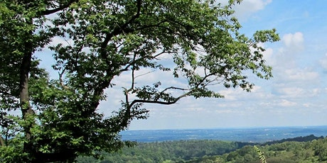 Forest Bathing+ Experience - Mindfulness in Nature at Newlands Corner tickets