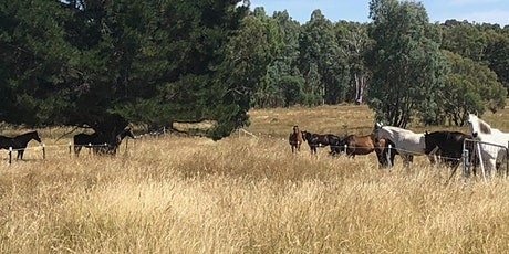 Creating and Managing a Regenerative Equine Property tickets