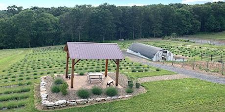 Lavender Farm Tour 2021 tickets