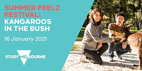 Kangaroos in the Bush - a Summer Feelz Fest event for Study Melbourne tickets