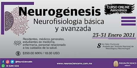 Neurogénesis: Neurofisiología básica y avanzada boletos