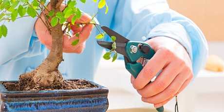 Bonsai-Advancing Your Skills with Ray Kincaid tickets