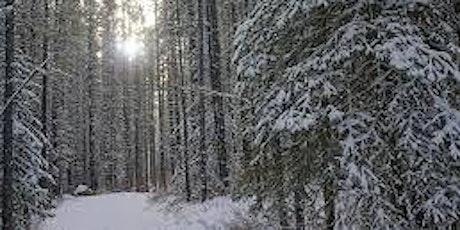 Beginner Guided snowshoe- Troll Falls (FEB) tickets