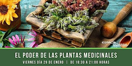 Taller: El poder de las plantas medicinales entradas