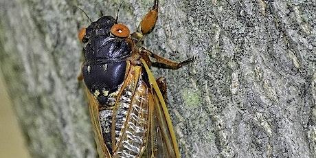 Cicadas with Dr. Gene Kritsky tickets