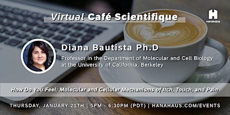 Virtual Café Scientifique | Mechanisms of Itch, Touch, and Pain tickets