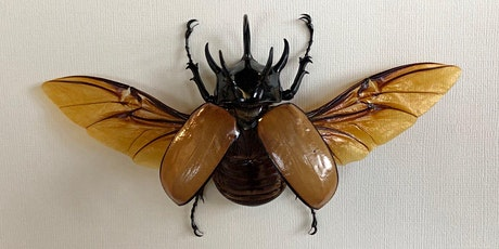 Horned Rhinoceros Beetle Pinning tickets