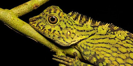 """""""Rainforest"""": Alex Hyde MSc Biological Photography and Imaging tickets"""