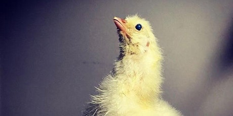 Baby Chicken Taxidermy with Jonna Lepeska tickets