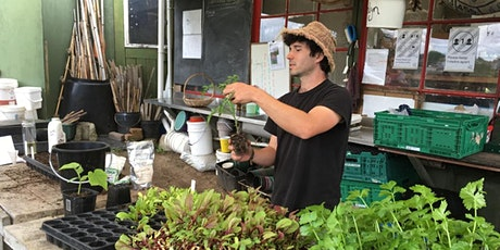 Beginner Home Gardening, with Pakaraka Permaculture tickets