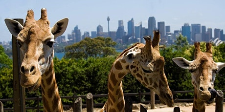 Arc Goes To... Taronga Zoo | Funner Summer tickets