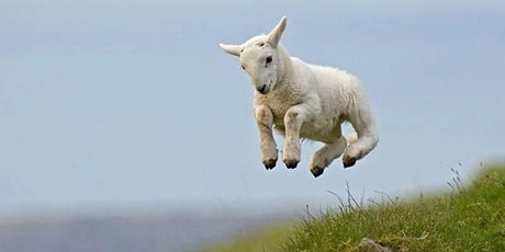 RESERVE TICKETS NOW for The Lambing Experience hosted by the Millar Family tickets