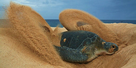 Climate change and marine turtles tickets