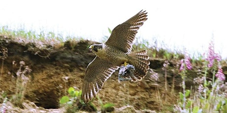 A Virtual Outing: Peregrine Wander tickets