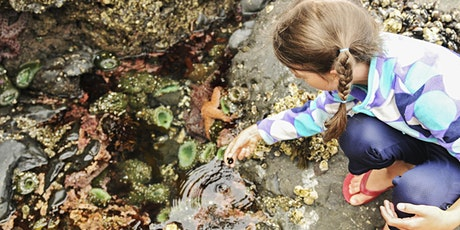 An ADF families event: Rock pool ramble, Hunter tickets