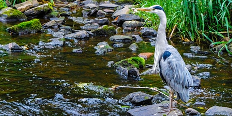 The Water of Leith and the work of the Conservation Trust tickets