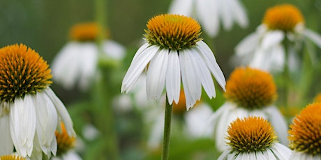 Gardening with Native Plants - Virtual Workshop with Seed Packets tickets