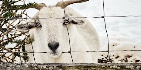 Hulse Hill Farm  Winter  Fiber Homesteading Tour tickets