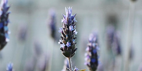 Yoga and Meditation in the Lavender Fields! tickets