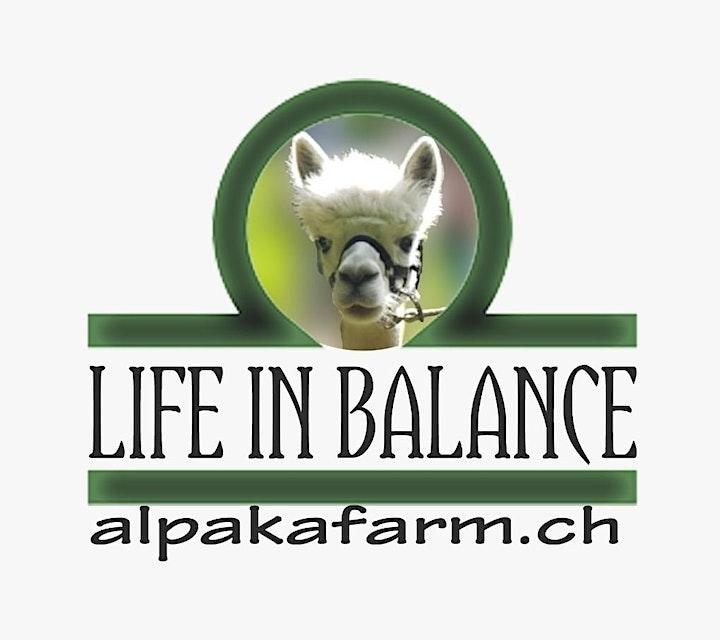 Alpakayoga Bern Nord-Yoga inmitten Alpakas: Bild