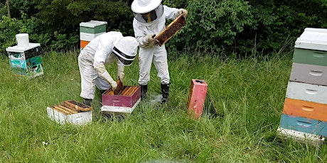 First Sunday Guided Nature Tour: Beekeeping with Lazy Dog Honey tickets