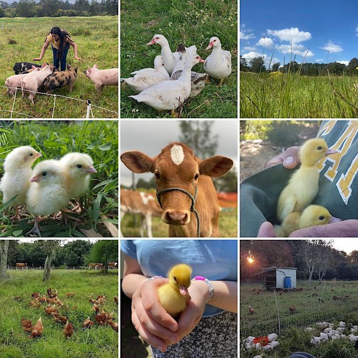 Grace Springs Farm - Morning Chores Tour image