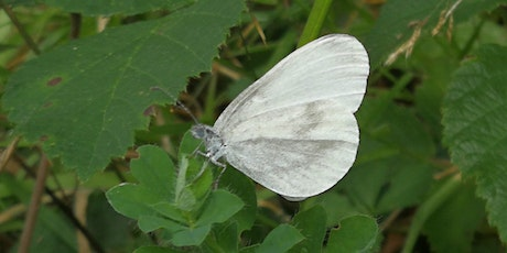 Saving the Wood White butterfly tickets
