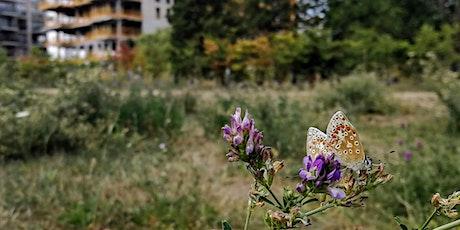 Big City Butterflies project tickets
