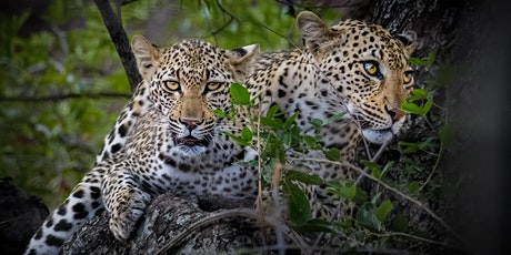 Southern Africa: Images and Impressions tickets