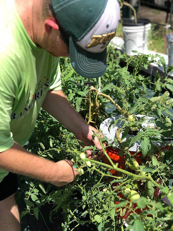 Veterans' GROW Garden Workday image