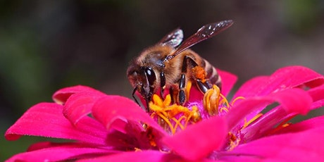 Bee Experience Workshop tickets