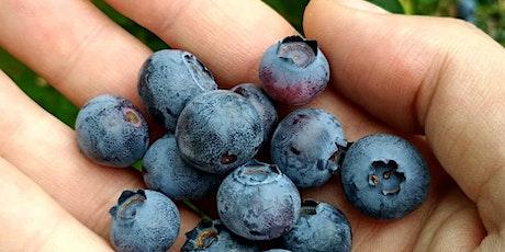 Growing Fruits & Berries: Randolph Backyard Gardener Course tickets
