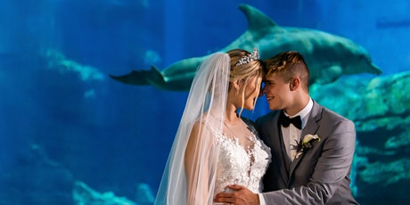 POP-UP WEDDINGS AT CLEARWATER MARINE AQUARIUM ON CLEARWATER BEACH tickets