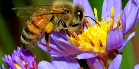 Gardening for Native Pollinators and Honey Bee Nutrition tickets