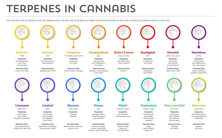 ACCRES Presents Ask an Expert - Talking Terpenes image