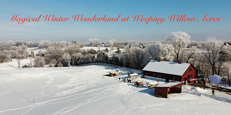 Magical Winter Wonderland at Weeping Willow Acres w/ LLAMAS & Farm Animals! tickets
