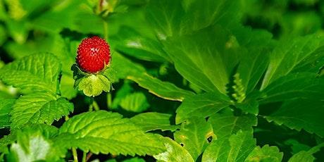 Edible Plants for Emergencies tickets