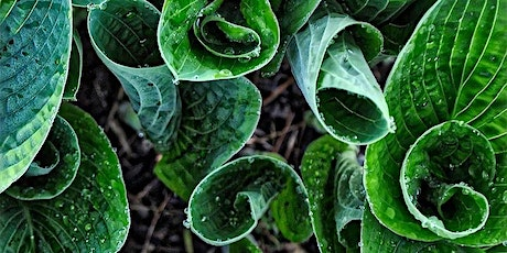 Perennial Vegetables and Edible Ornamentals tickets