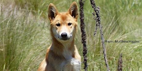 Dingoes of Namadgi tickets