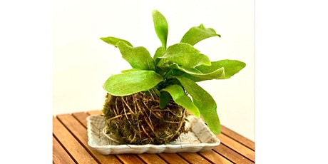VIRTUAL Kokedama Class with Indigro Plant Design tickets