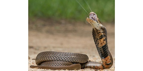 Snake venoms in attack and defence tickets