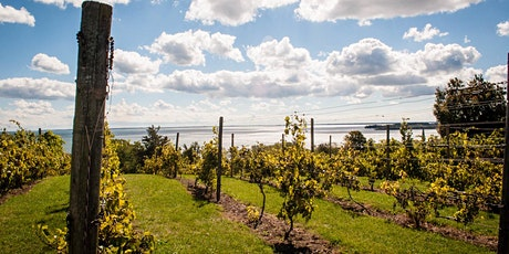 Prince Edward County - A Tasting & Class tickets