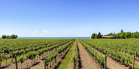 The Wines of Niagara - A Tasting & Class tickets