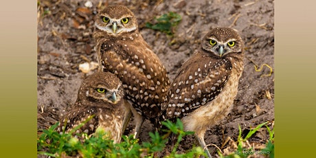 Burrowing Owls of Cape Coral - Photography Field Trip tickets