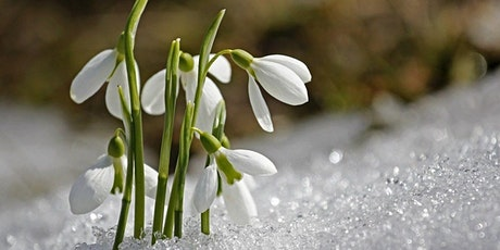 Imbolc Custom Guided Meditation -  Registration Required tickets