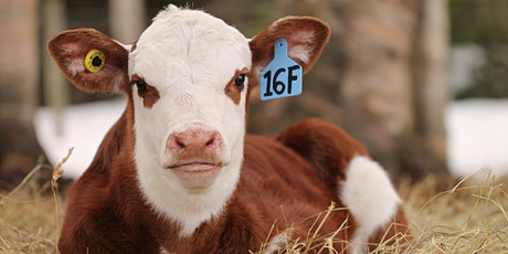 4-H BC  Presents: Beef Leader Roundtable tickets